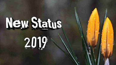 Photo of New Status